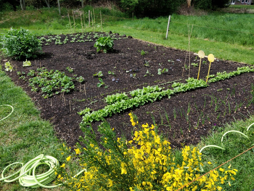 Overview of our vegetable garden