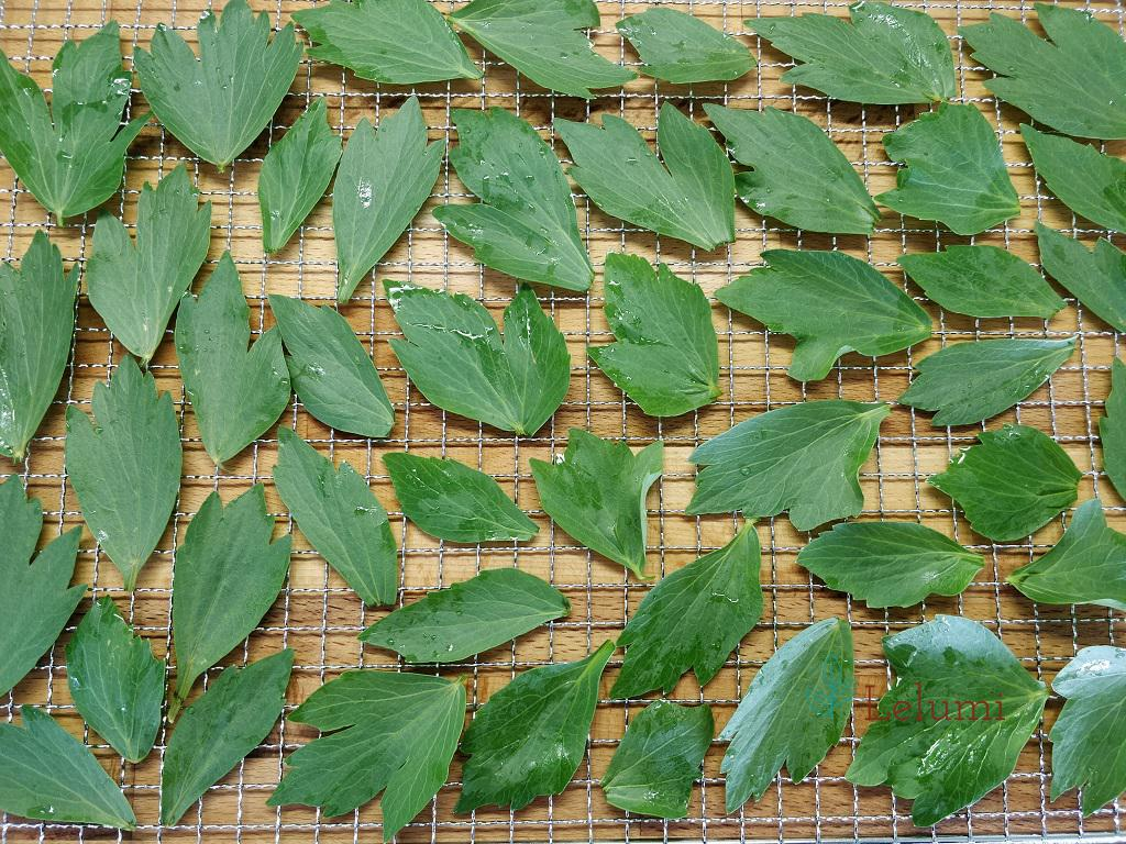A dehydrator tray covered by lavas leaves