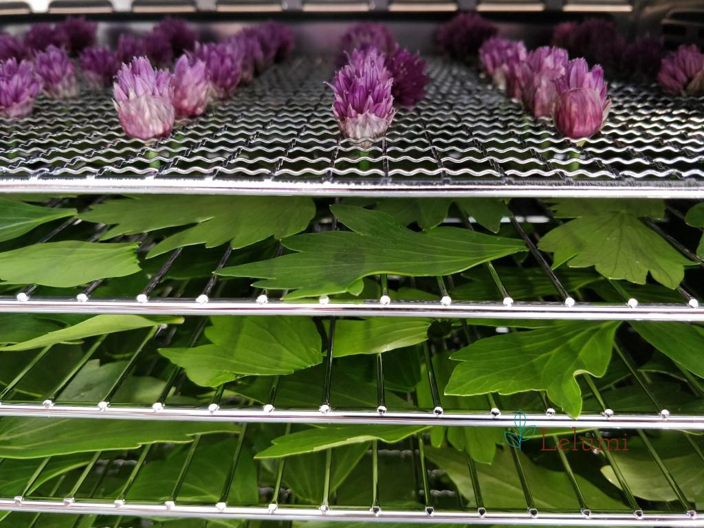 Chives flowers and lovage in the dehydrator before starting the process of dehydrating
