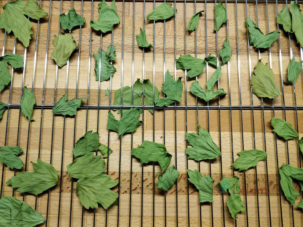 All dried out lovage