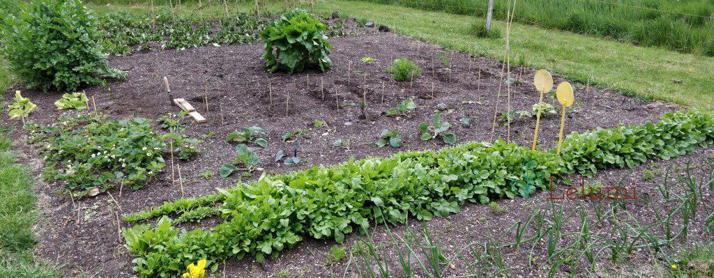 Header Garden Update 6