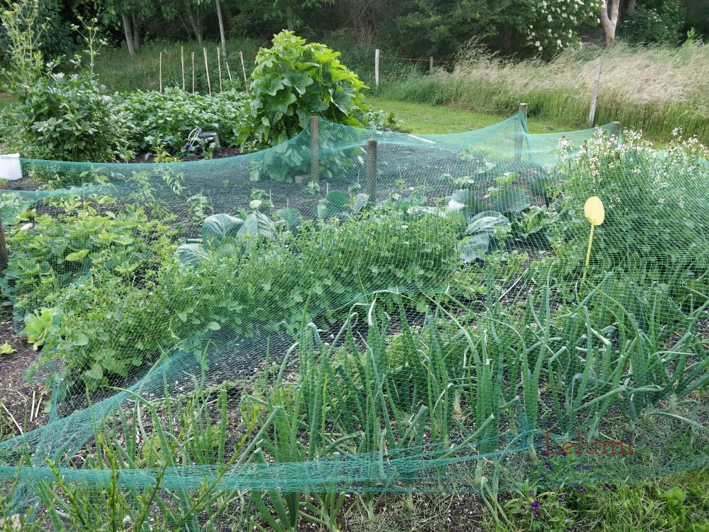The garden portion that's covered with the netting