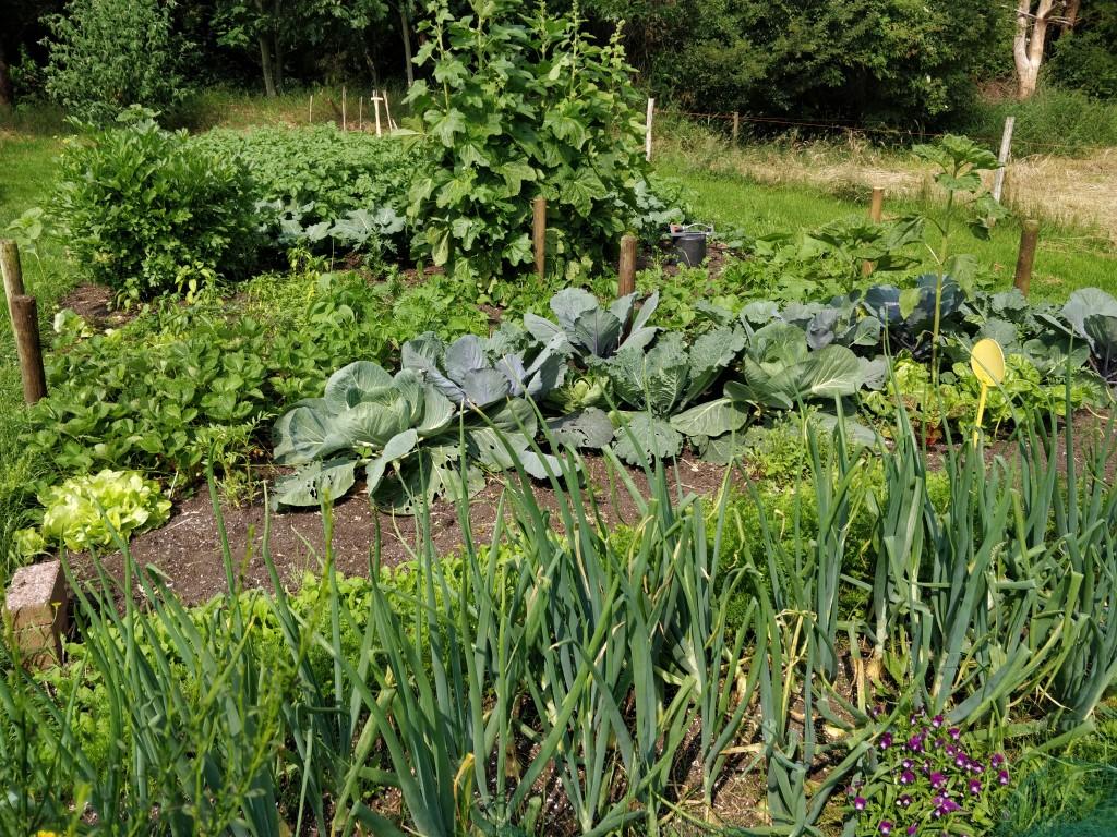 Vegetable garden overview